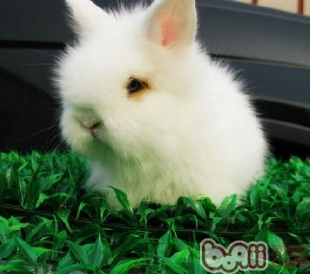 安哥拉兔兔毛价格_长毛兔_农产品供应_一亩田农业网