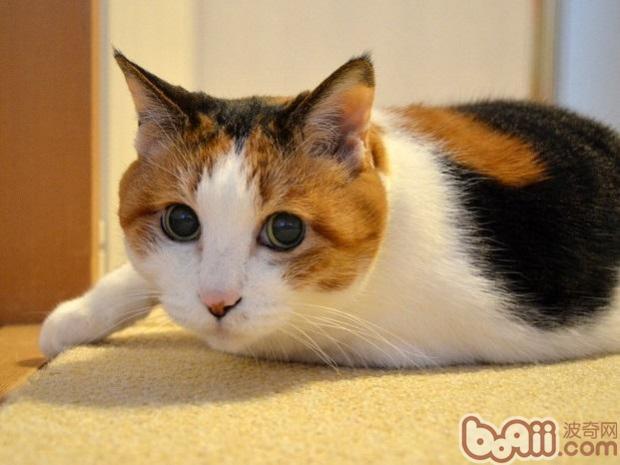如何正确护理和照顾生病的猫