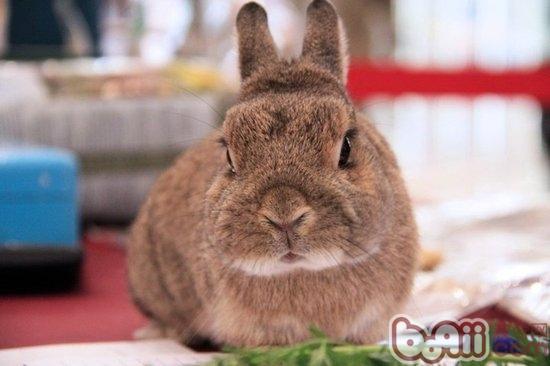 兔子的胆子非常小,也很容易因为寂寞而感受到压力
