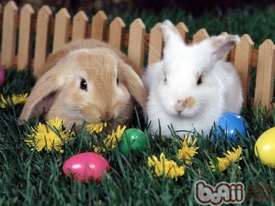 兔兔生病常用的药物有哪些|兔子疾病-波奇网百科大全