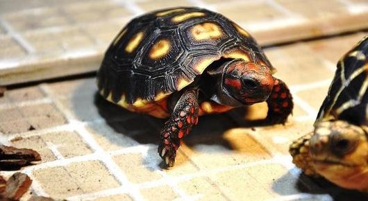 小乌龟钻沙冬眠