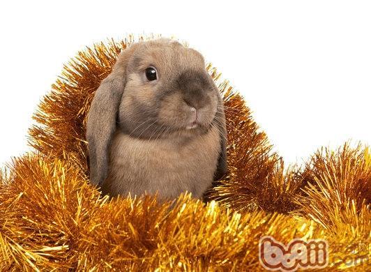 可以治疗兔兔哪些疾病|兔子疾病-波奇网百科大全