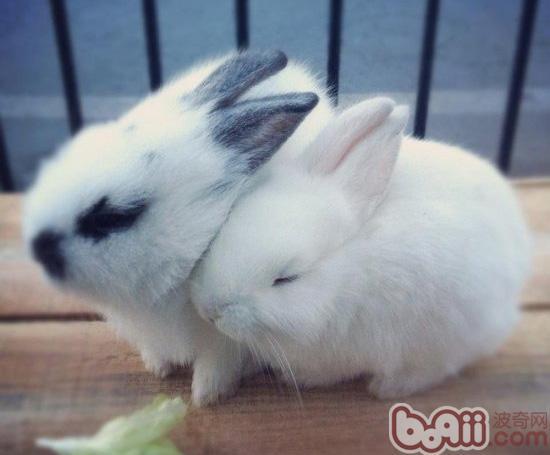 正确使用饲养用具可减少兔生病|兔子疾病-波奇网百科