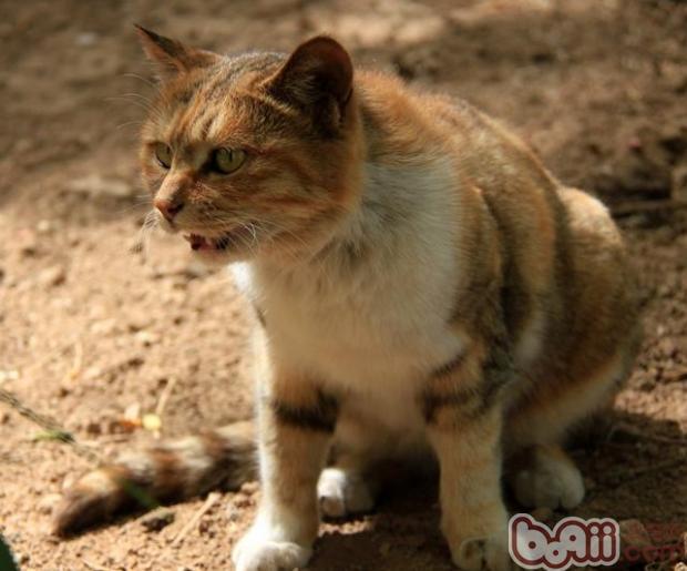 猫咪在地震的时候会有什么反应