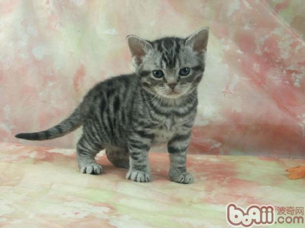 Cat Breeds Related Keywords & Suggestions - Cat Breeds ... Y Dog Names