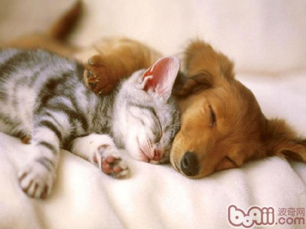 怎样使猫咪和狗狗和平相处|猫咪训练-波奇网百科大全