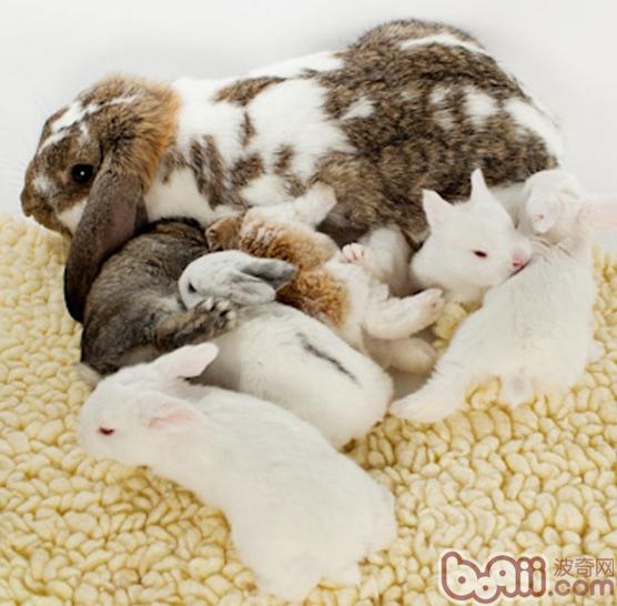 训练宠物兔兔的记忆力