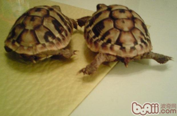 动物 龟 620_409