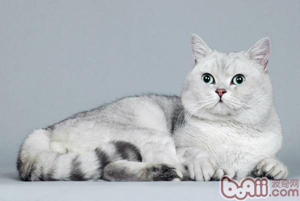 如何培养和锻炼猫咪的活力
