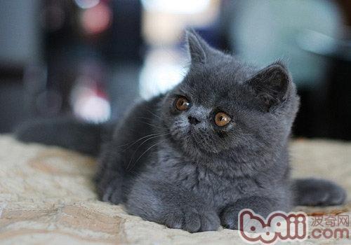 小猫耳螨牌子好不好 小猫包哪款好评价