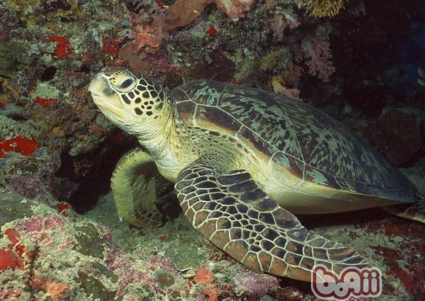 是海洋中的爬行类动物