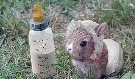 兔子可爱的外表已经成为很多人心中的理想宠物