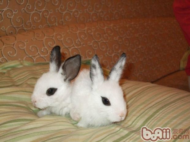 怎么知道兔子的年龄呢?