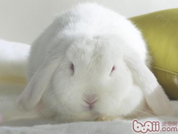 可爱的动物,动心了吗?
