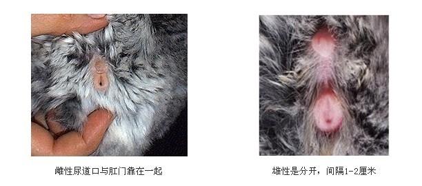龙猫口风琴简谱