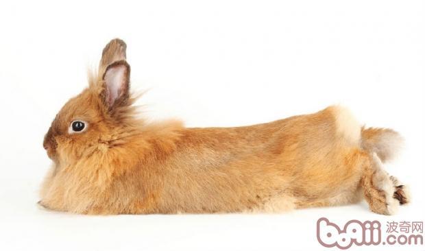 给兔兔洗澡的注意事项|兔子养护-波奇网百科大全