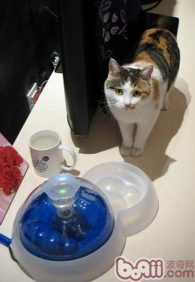 如何判断猫咪饮水量以及怎样让猫咪多喝水