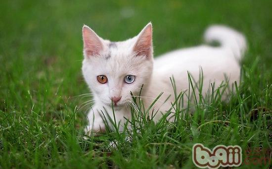 小孩子跟猫咪玩耍时,一定要在一旁监督,适时劝阻和教导孩子正确对待
