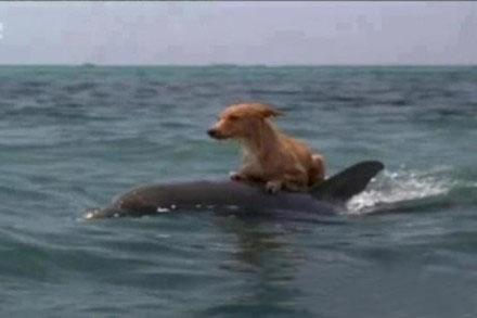 高智商的海豚你见过吗?