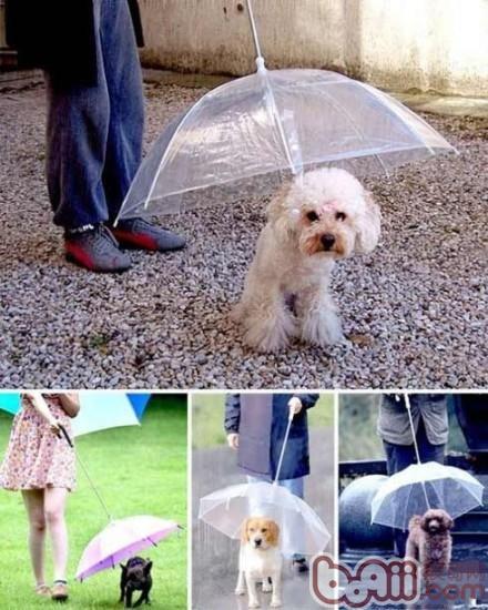 型被风吹乱了,被雨淋坏了呀~~ -狗狗专用伞来了