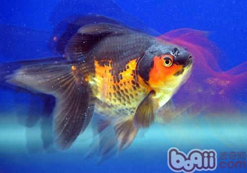 动物 鱼 鱼类 500