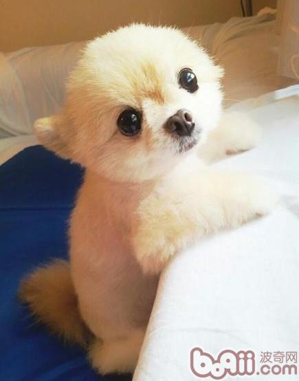 狗的品种及图片名字_这+是什么品种的狗狗?-中国合伙人台湾票房,