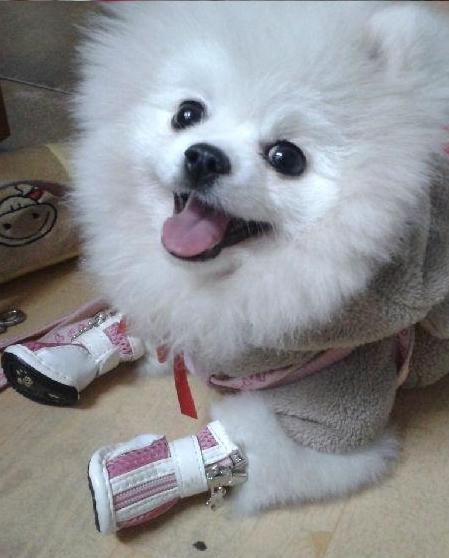 可爱小狗咪卖萌图片